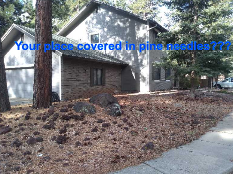 Need your pine needles cleaned up??