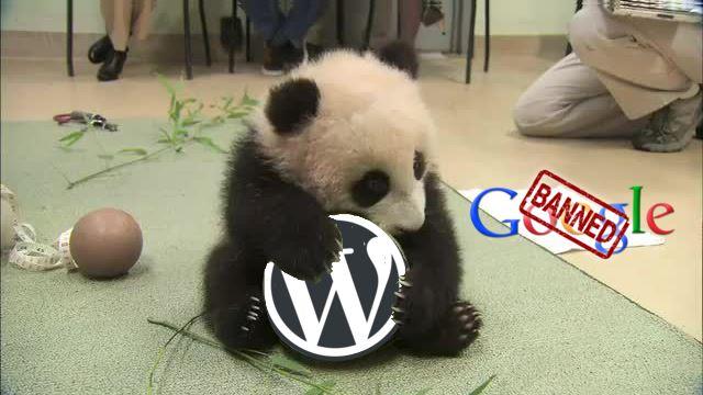 sofia-wordpress-meetup-june