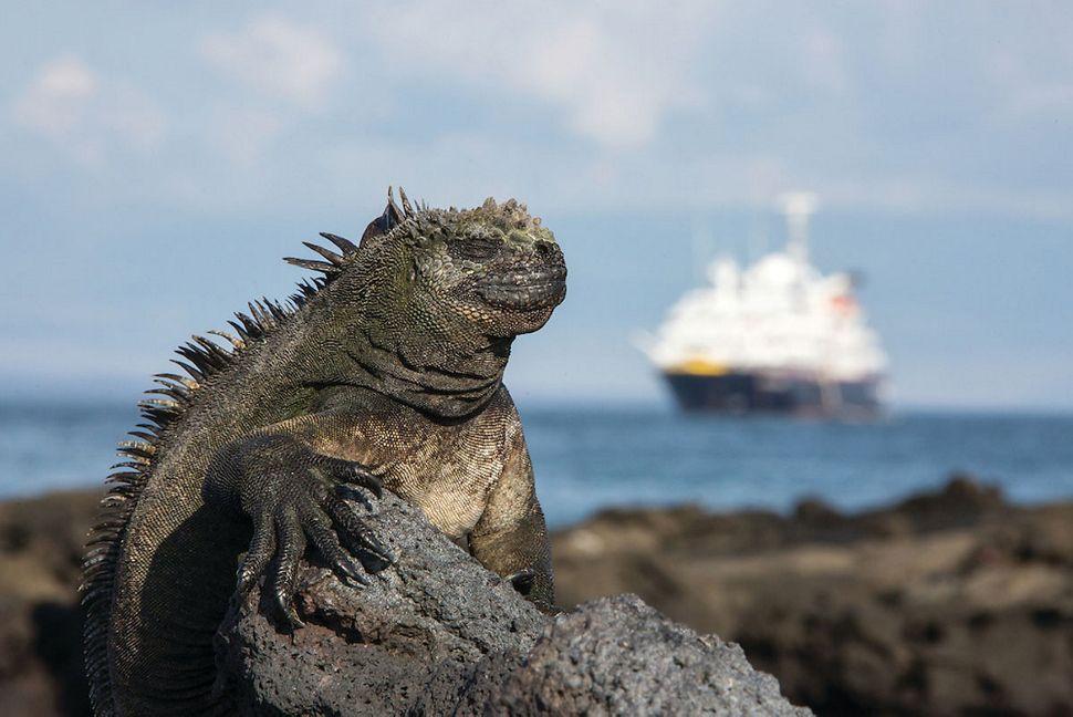 Silversea - Silver Galapagos - Echsen
