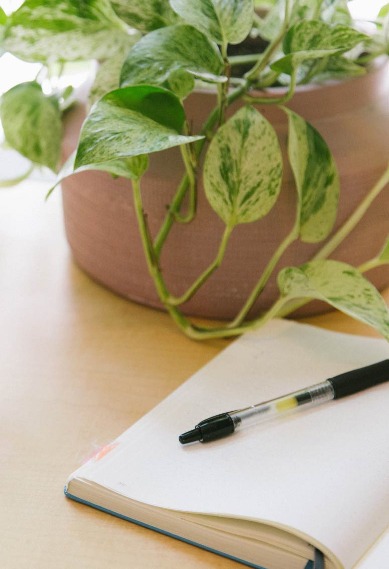Notebook and pen with plant in background