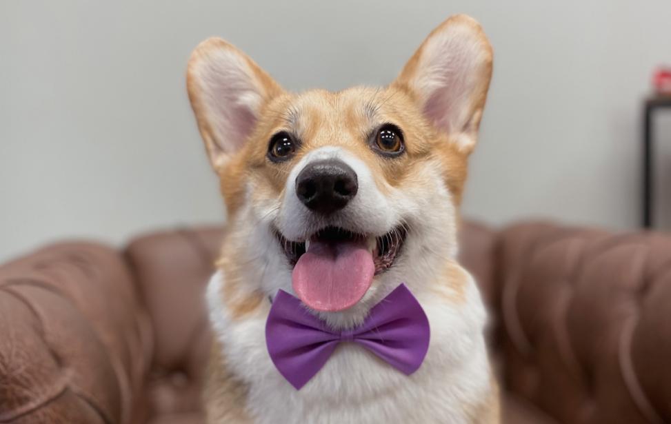 «Собака сгрызла пластиковую карту» или как сеть салонов красоты для животных увеличила вовлечённость клиентов в программу лояльности до 90%