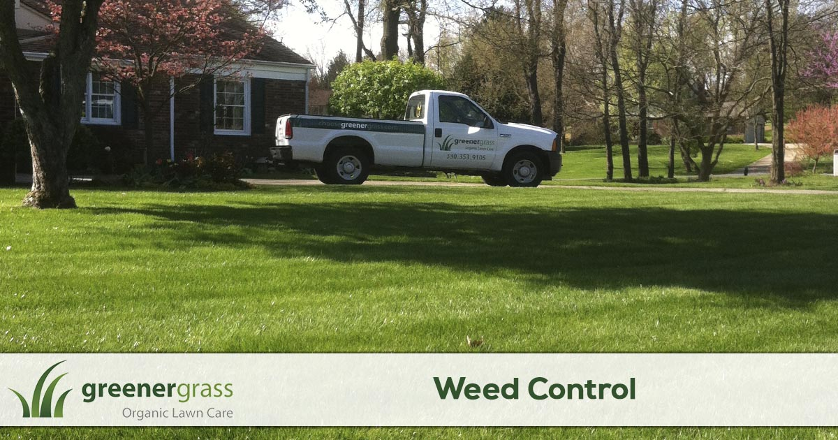 Weed control service in Canton, North Canton or the Green Ohio area.