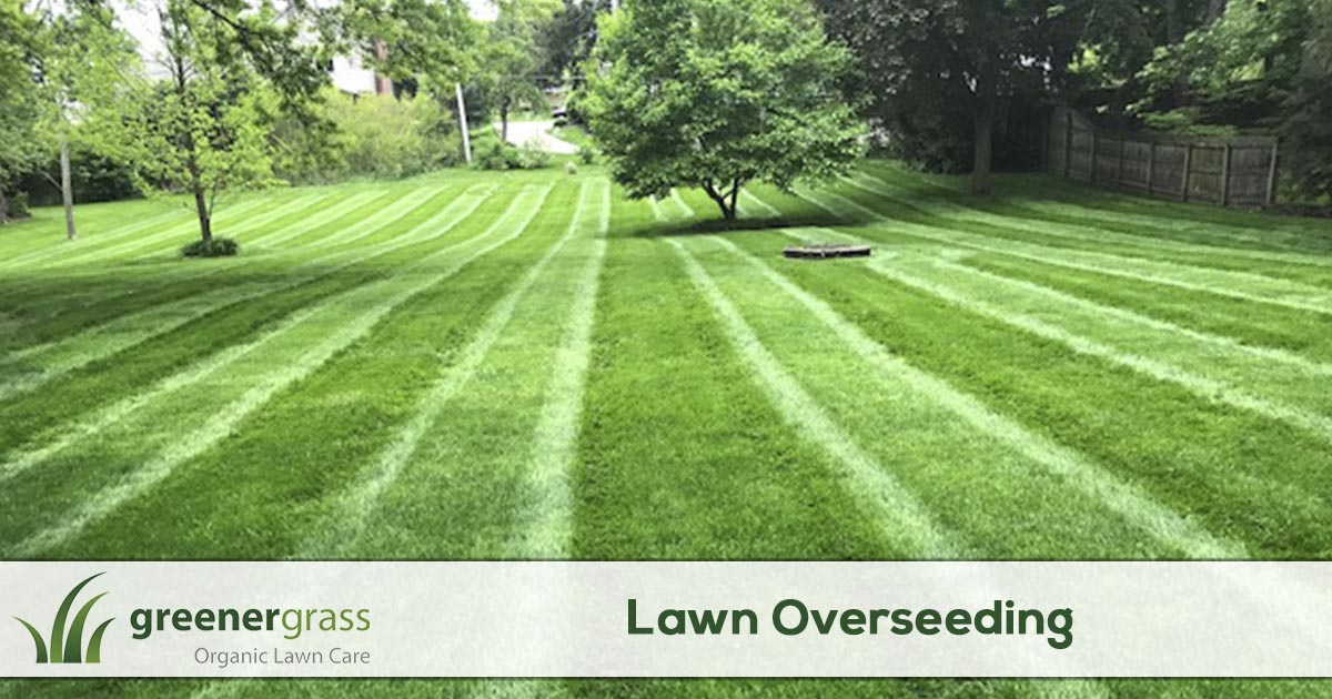 Lawn overseeding service in Canton, North Canton, and Green Ohio