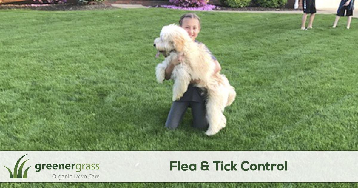 Flea & Tick Control Services in Canton, North Canton, and Green Ohio