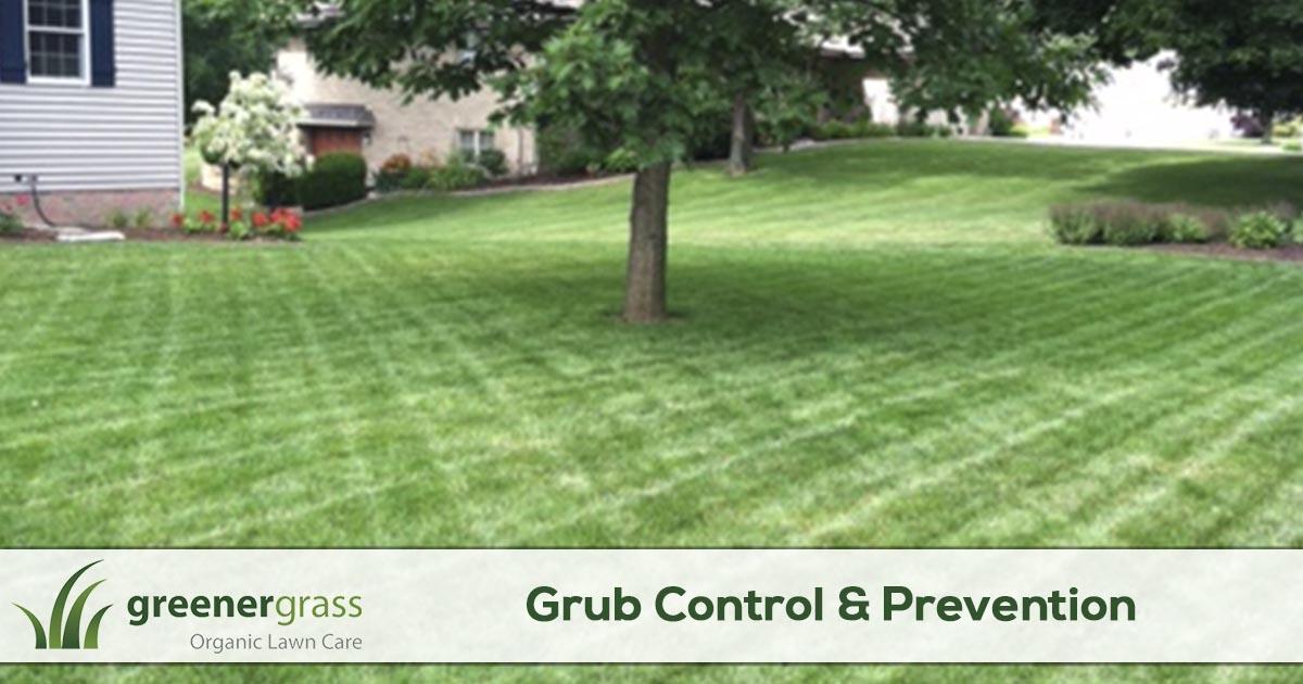Grub control service in Canton, North Canton, and Green Ohio.
