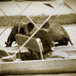 Elephant at Siwandu