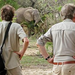 Elephants Siwandu