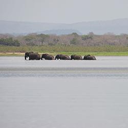 Elephants crossing Lake Nzerakera