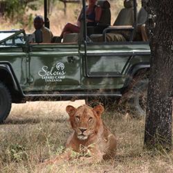 Lion sighting Siwandu