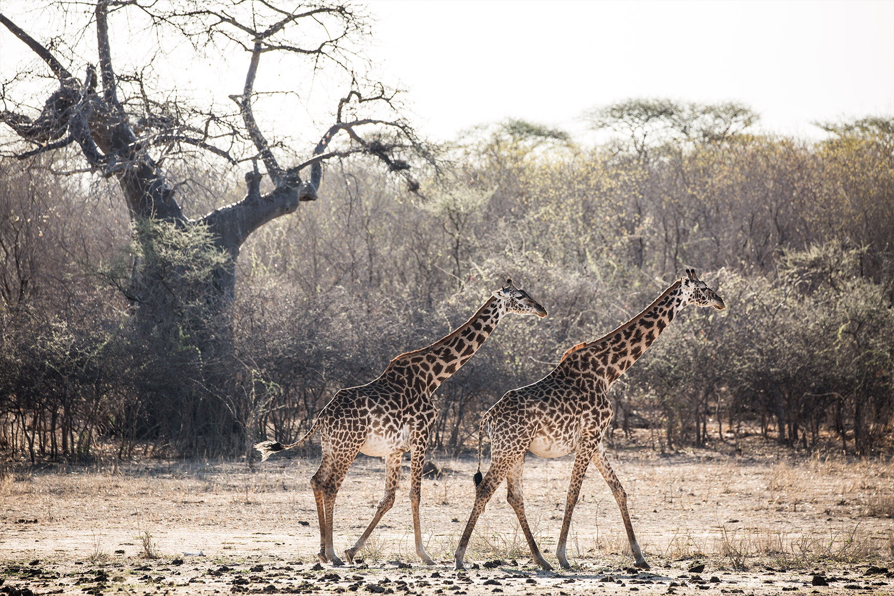Safari Guide in Selous Game Reserve 2021: Nyerere NP