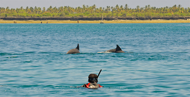 Swimming with dolpins on Fanjove Island