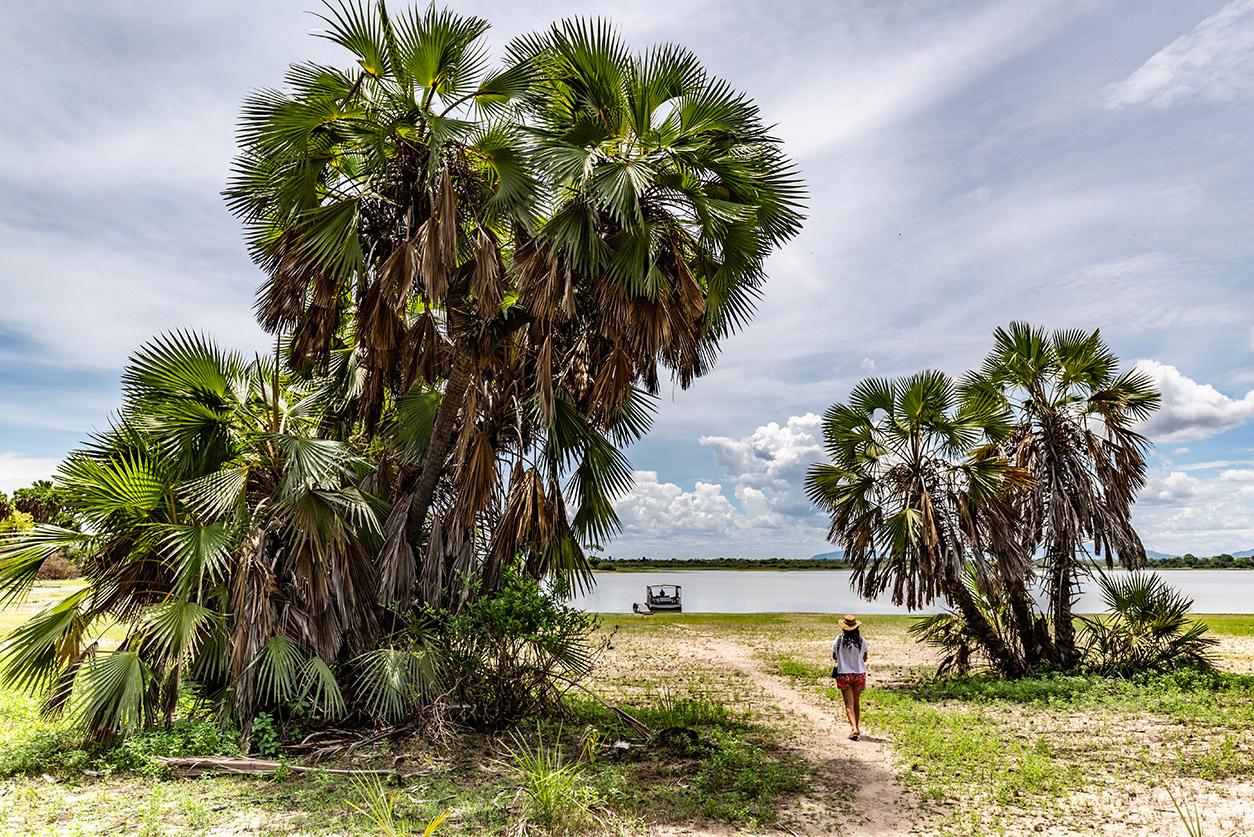 Doum Palm Trees, Siwandu