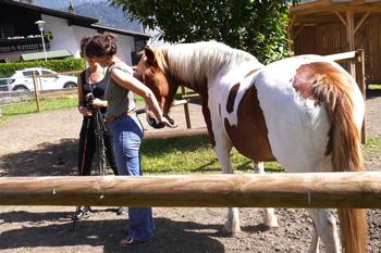 Pferdestärke 3