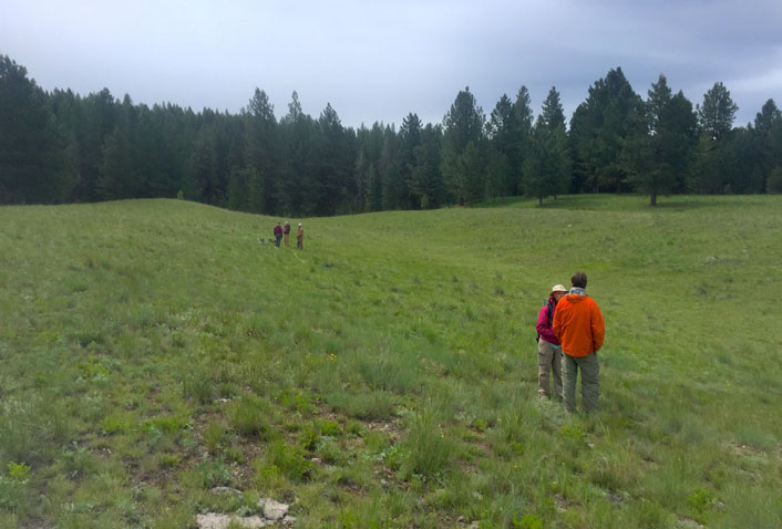 John Maron's students setting up a field site in the Blackfoot Valley