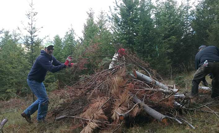 Removing dead wood and heavy underbrush helps to mitigate wildfire danger.
