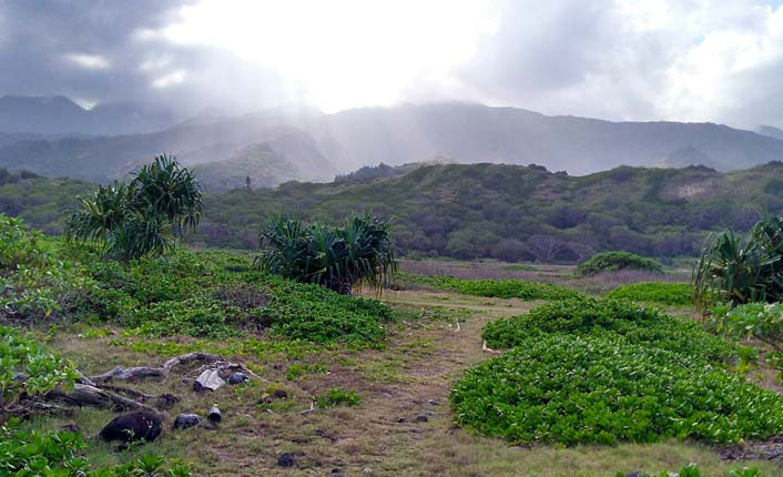 The Waihe'e Refuge's dunes are rugged and covered in vegetation.