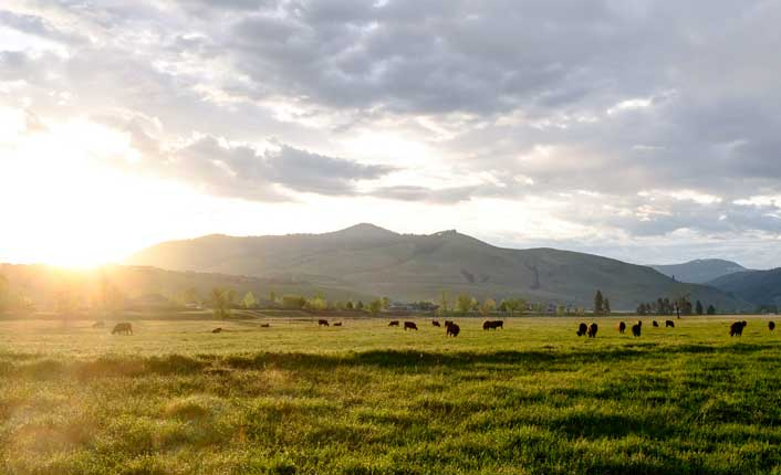 Sunrise over the Oxbow Cattle Company. Photo courtesy of the Oxbow Cattle Company.