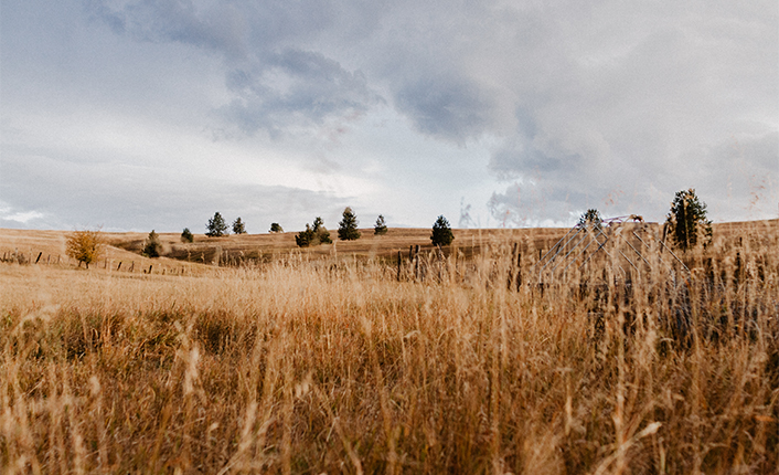 The Homestead is surrounded by a mosaic of habitats, including extensive grasslands. Photo by Rio Chantel Photography.