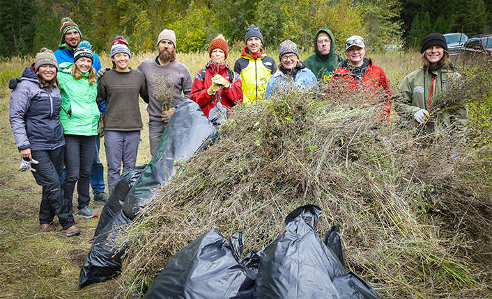 Our National Public Lands Day volunteers pulled over 1,000lbs of knapweed! Way to go, crew! Photo by Geoff Sutton.