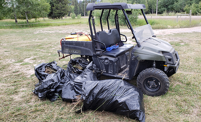 Some of the invasive weeds that the Ponderosa Snow Warriors and others helped to remove this season. Photo by Renee Lundberg.