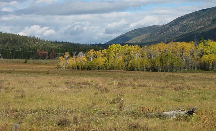 Patterson Prairie conservation easement aspen seep