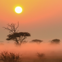 Sonnenaufgang in der Savanne