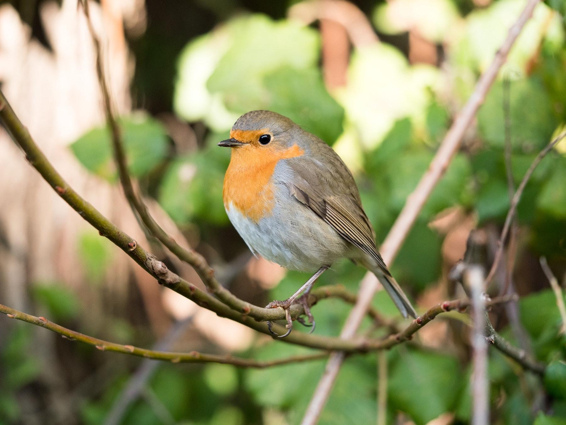 Bird ID Guide