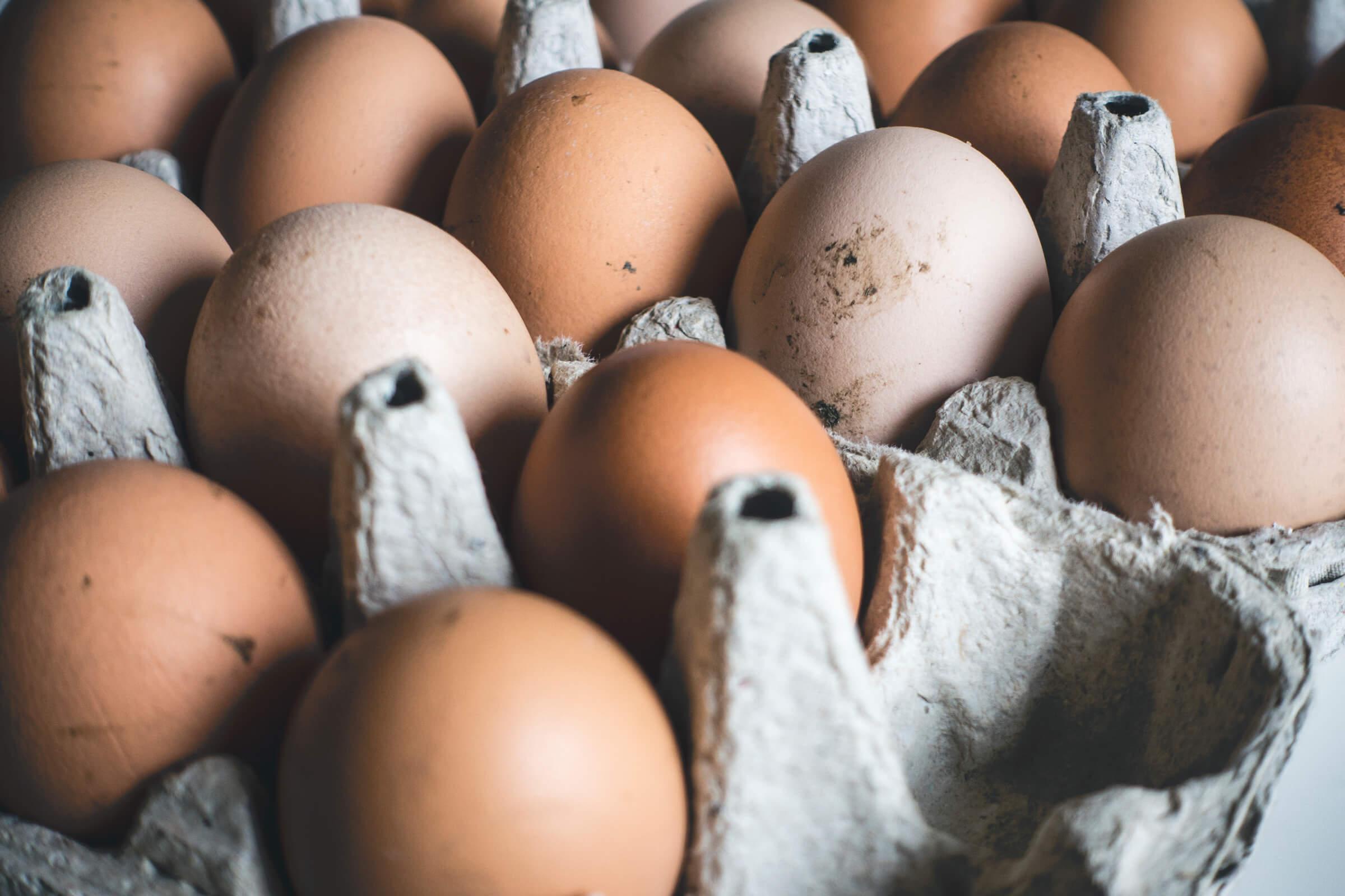 Hanusarstova fresh eggs photo