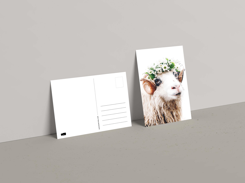 Hanusarstova post cards