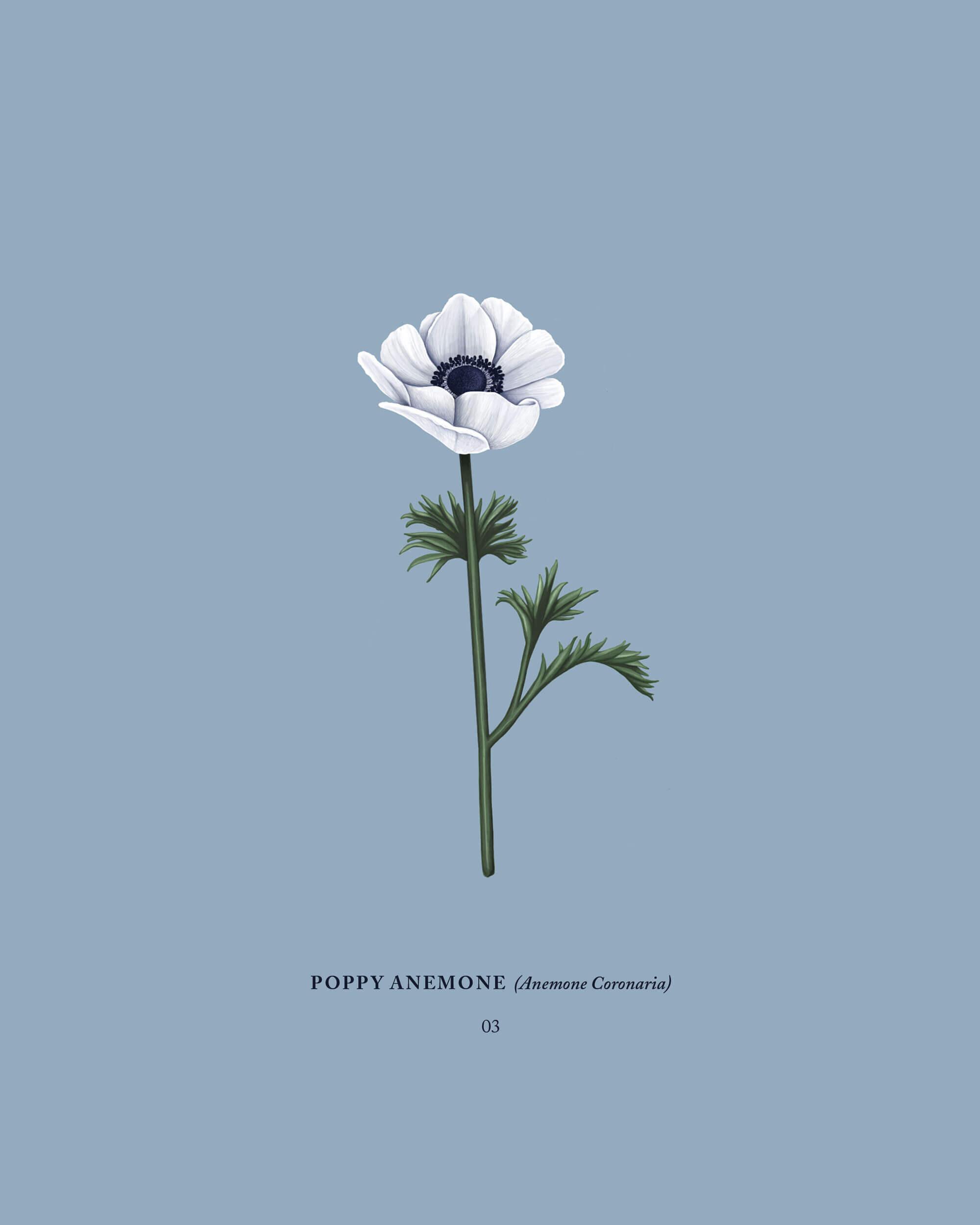 Mariel Feldman illustration anemone