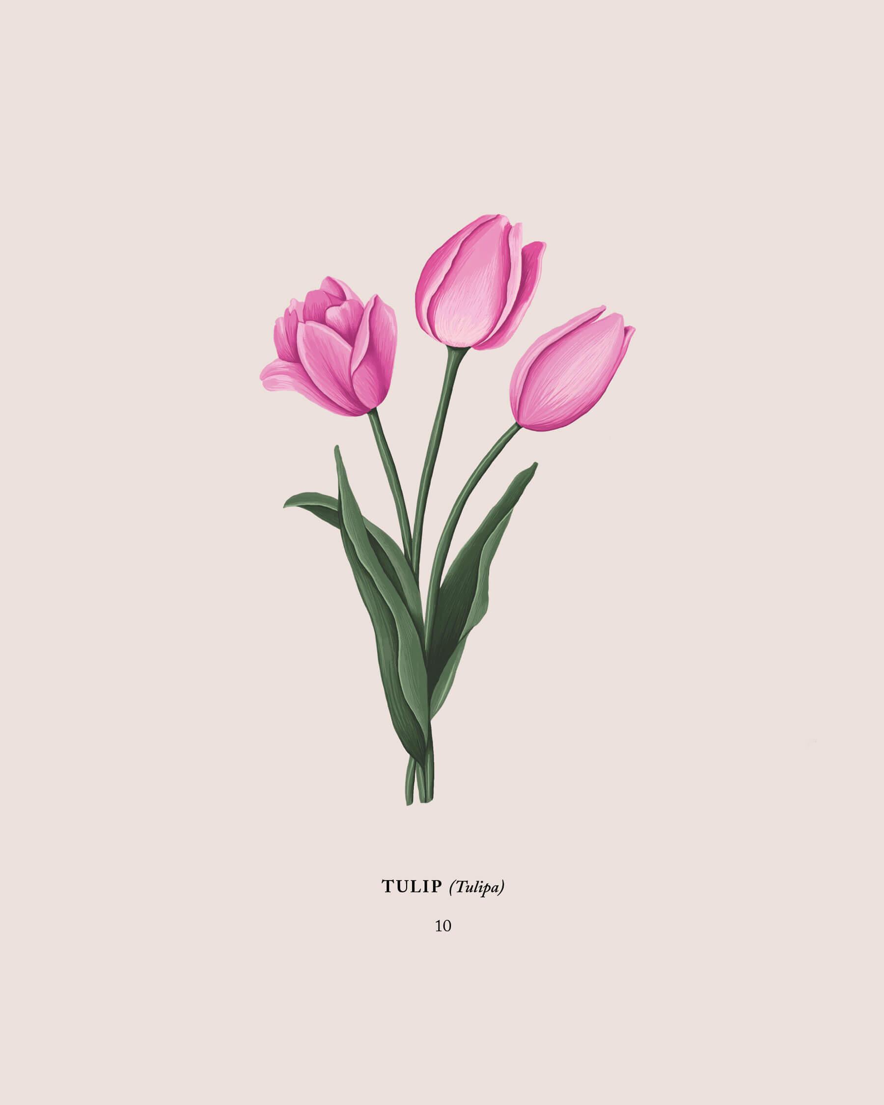 Mariel Feldman illustration tulips