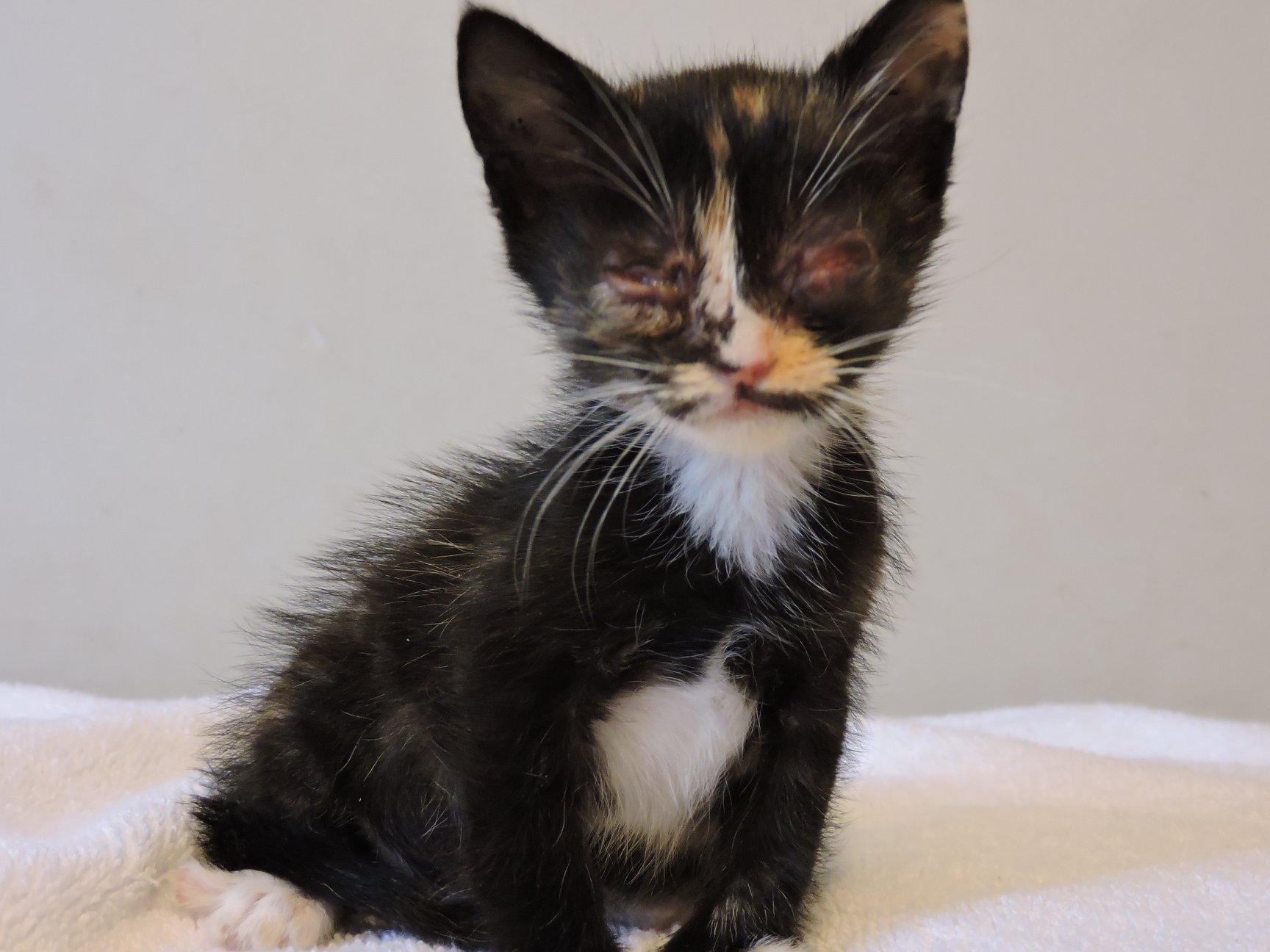 6 kittens who were abandoned in the rain need our help!