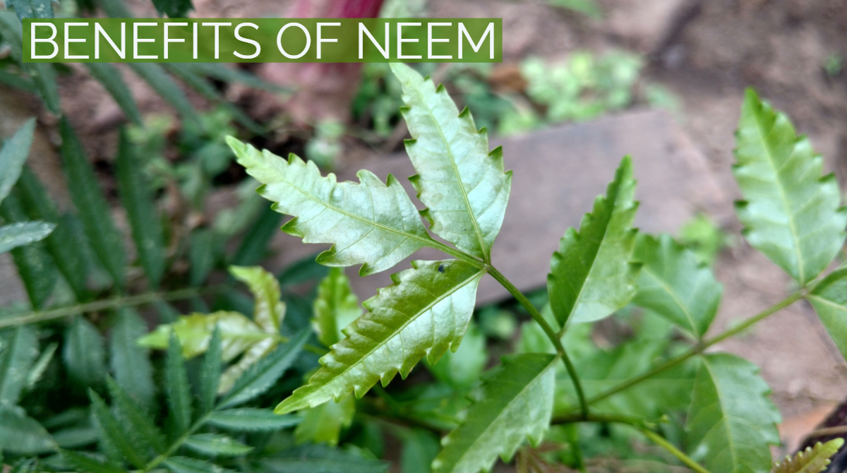 8 Amazing Benefits of Neem