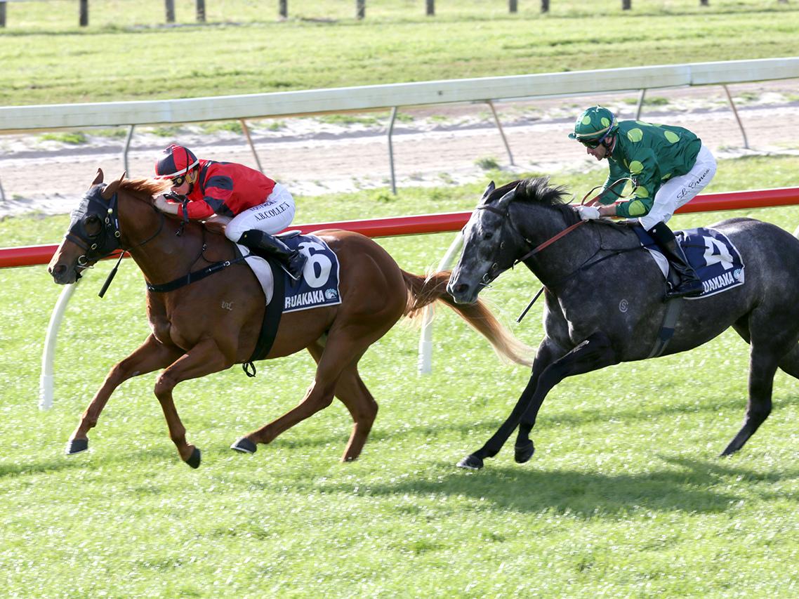 Horse racing in Ruakaka, Northland