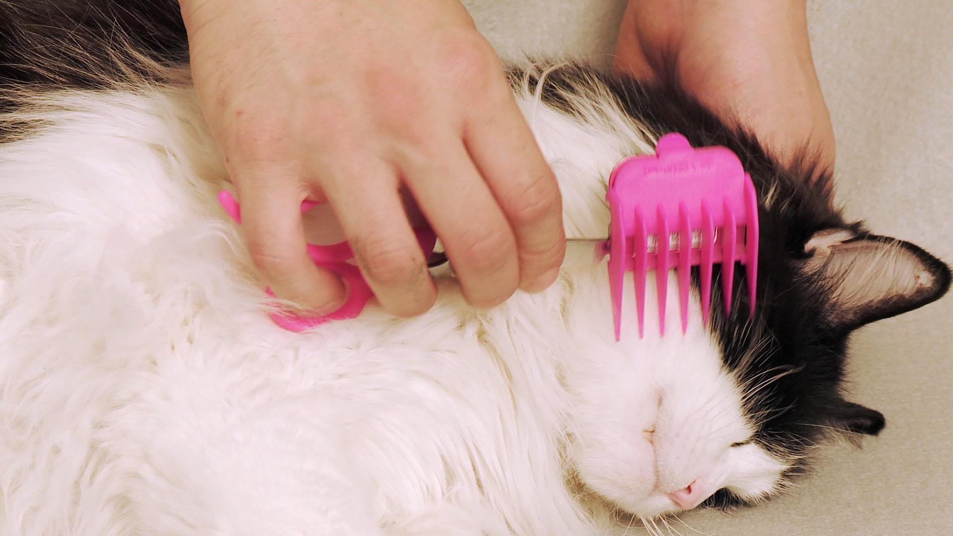 Как правильно подстричь ногти кошки фото