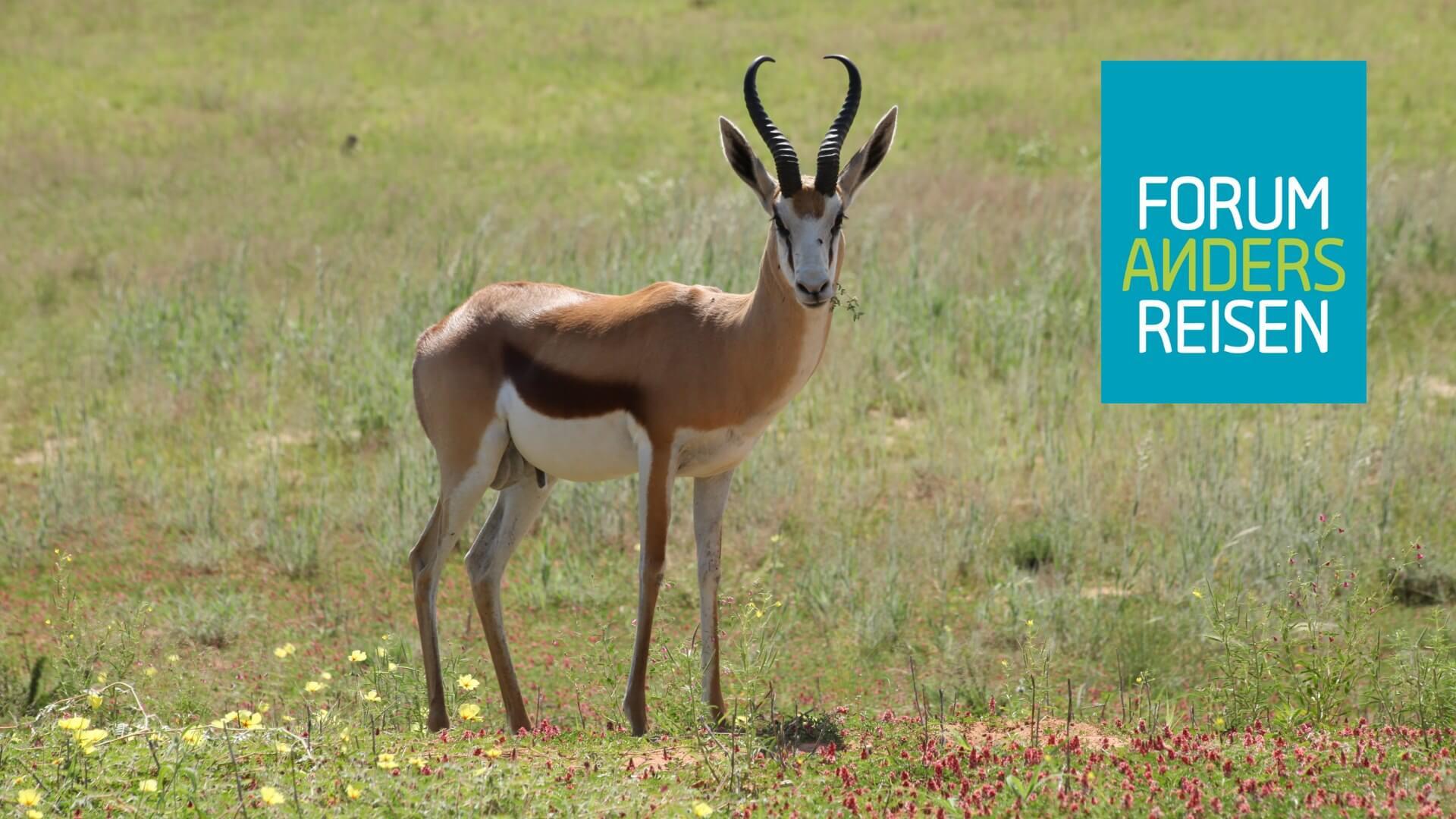 Ajimba African Tours als Mitglied im Forum Anders Reisen