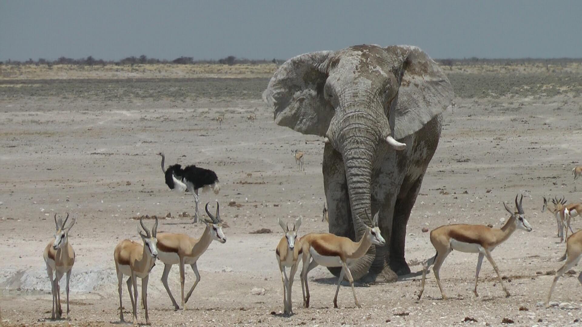 Namibia wie aus dem Bilderbuch