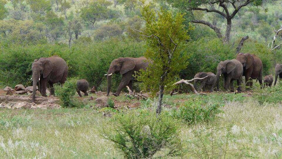 KARIEGA PRIVATE GAME RESERVE - Big Five Safari und vielfältige Tierwelt in den schroffen Landschaften des Eastern Cape Valley.