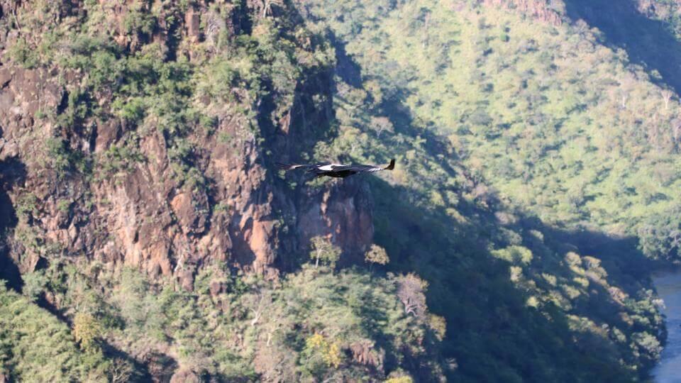 GORGES - Die Lodge am Rande der Schlucht ist besonders für Vogelkundler und die Beobachtung graziler Flugmanöver ein Traum...