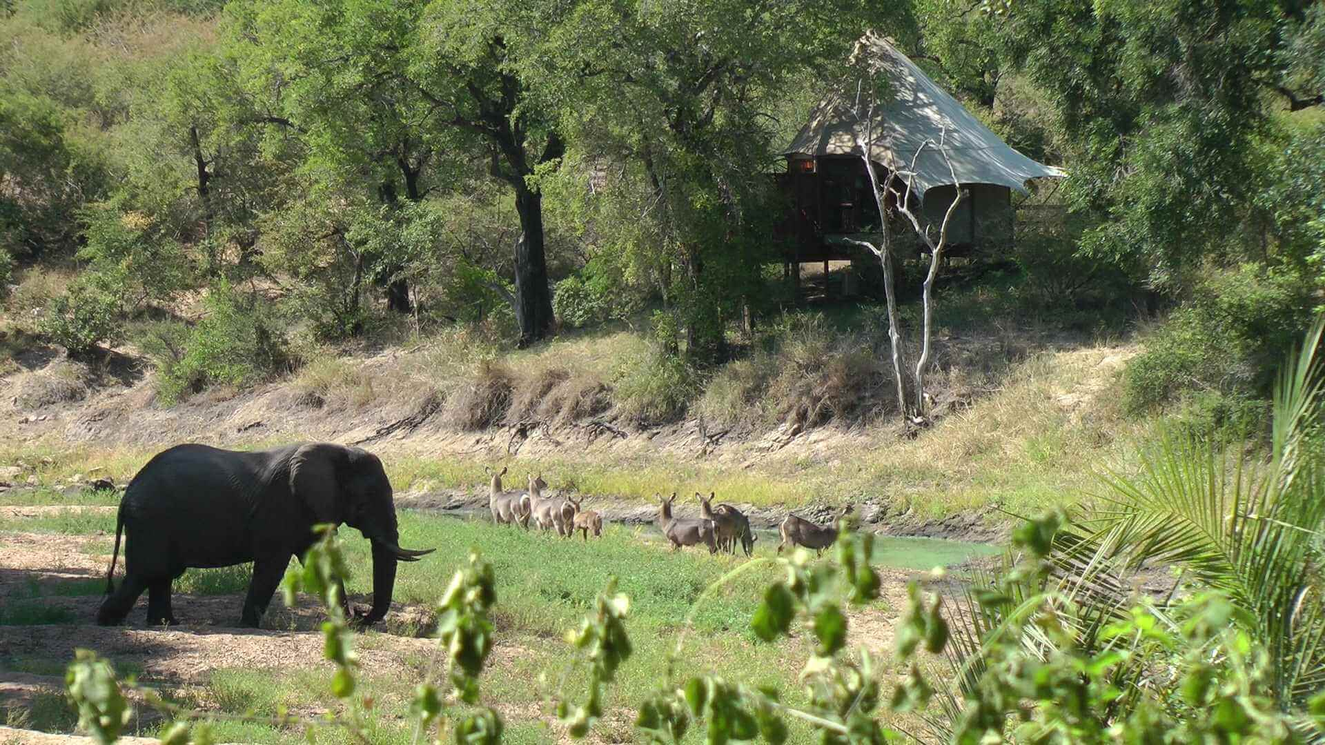 Wild animals next to a lodge, Kruger national Park, South Africa