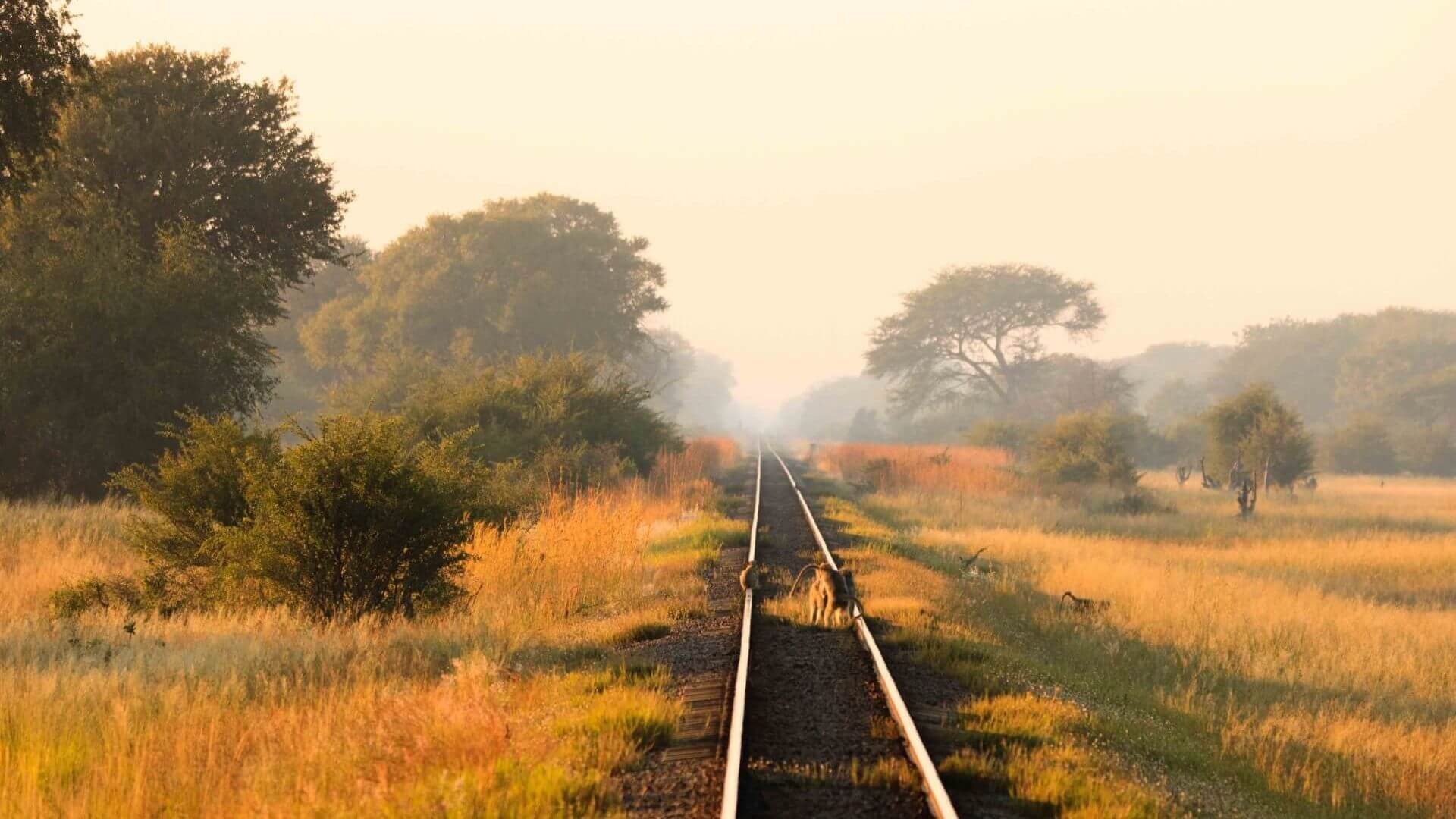 Monkeys on train tracks, Hwange National Park, Zimbabwe