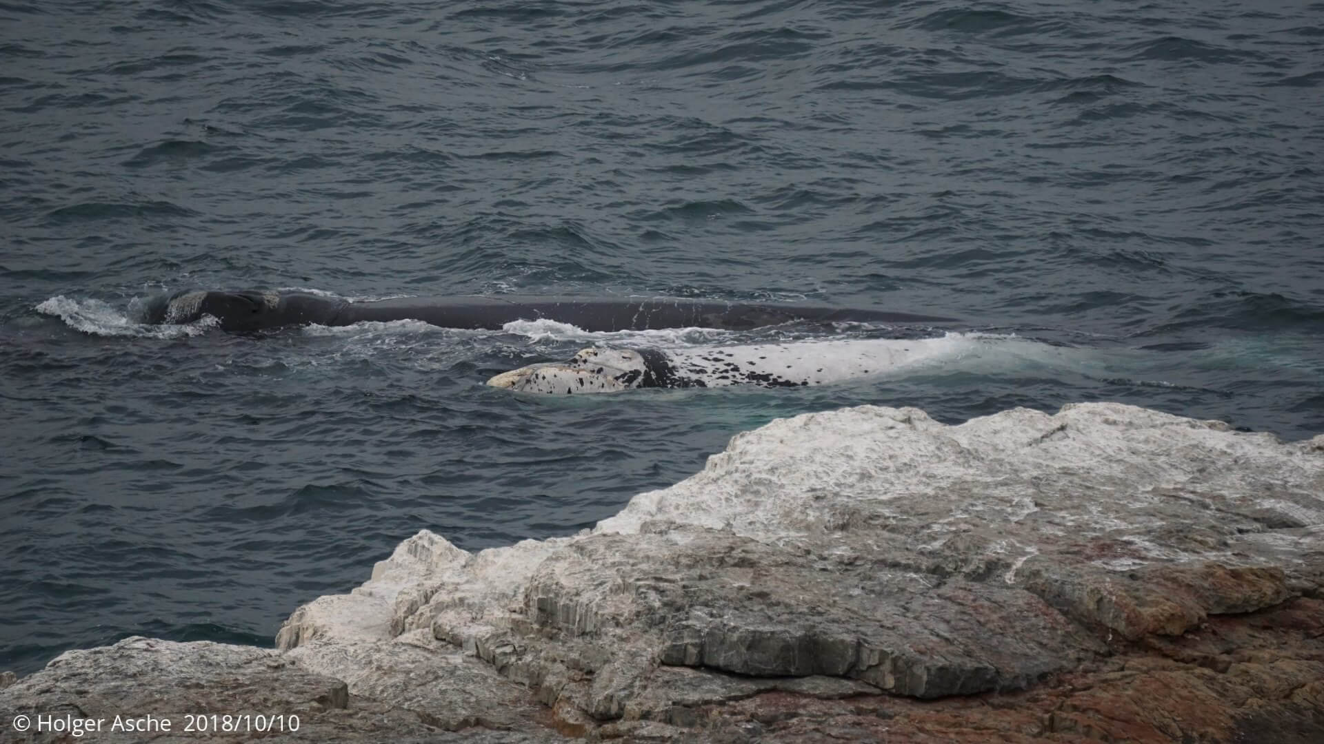Mother whale with white youth, Hermanus, South Africa
