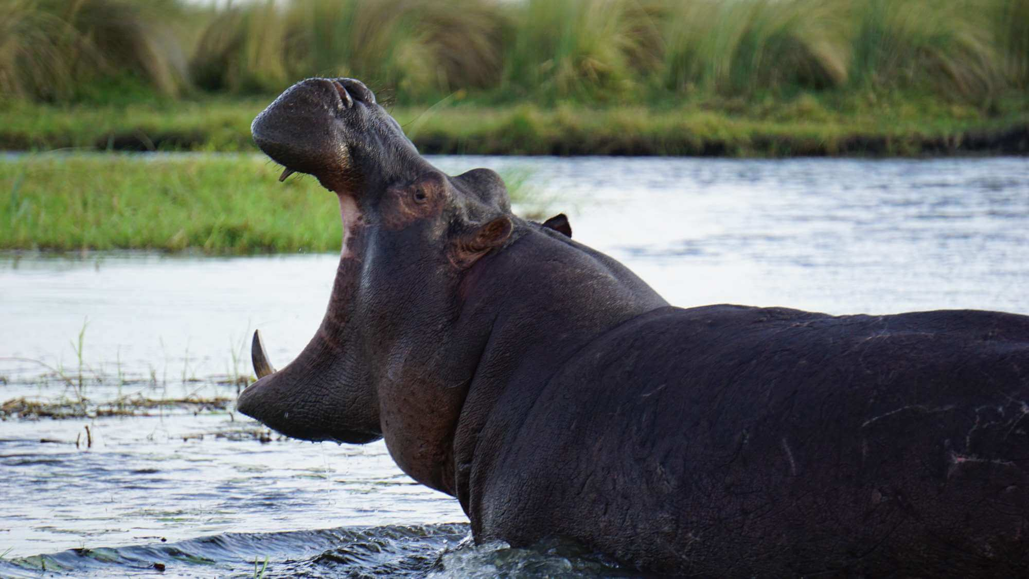 Okavango Delta Safari: just 4 nights but intensive.