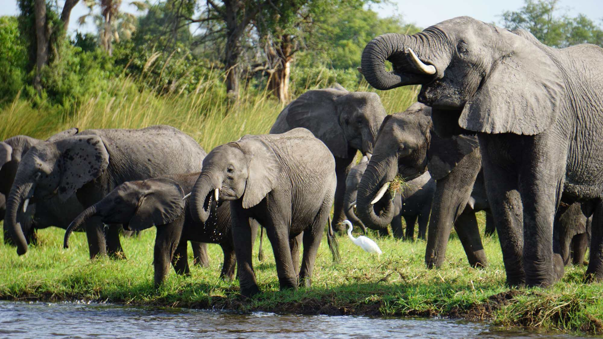 8 days Chobe, Okavango and Victoria Falls
