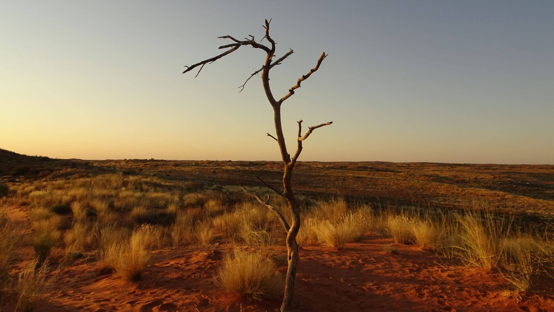 Kalahari entdecken & Kap genießen