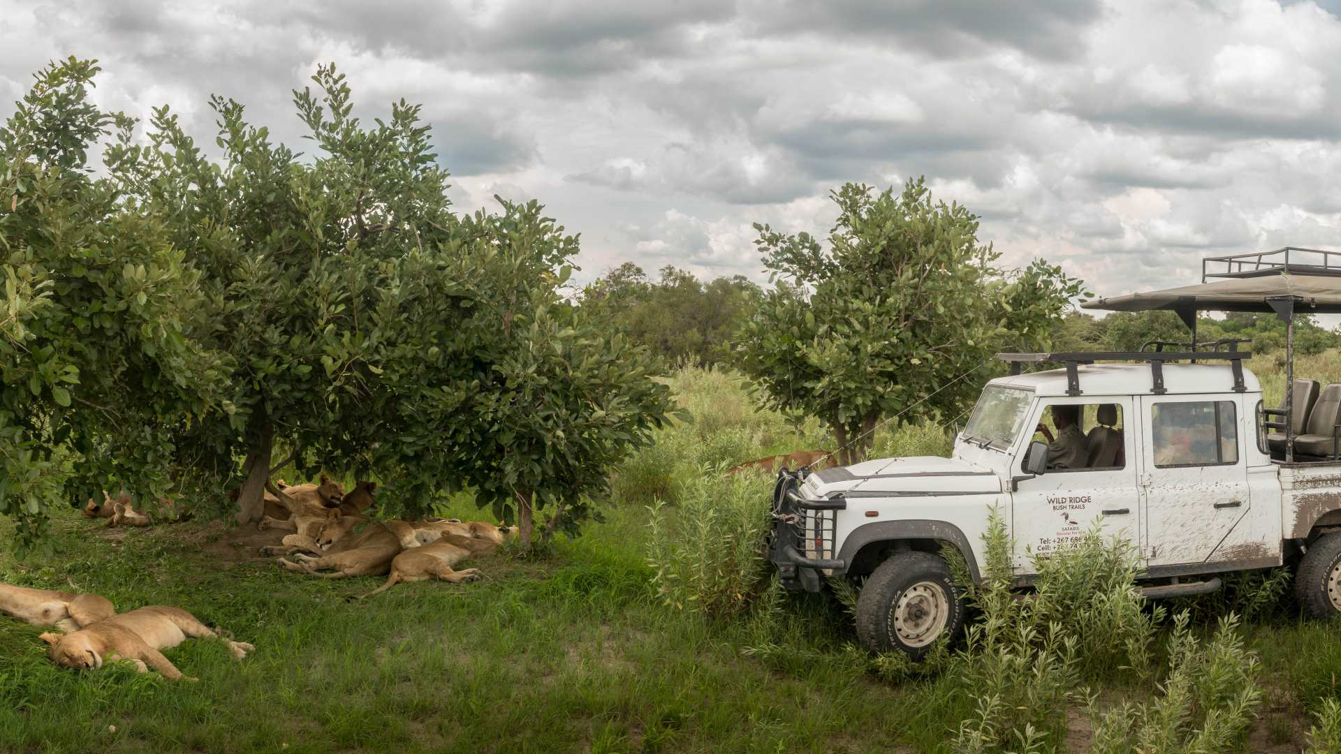Privat Safari Botswana | For you and your family with friends