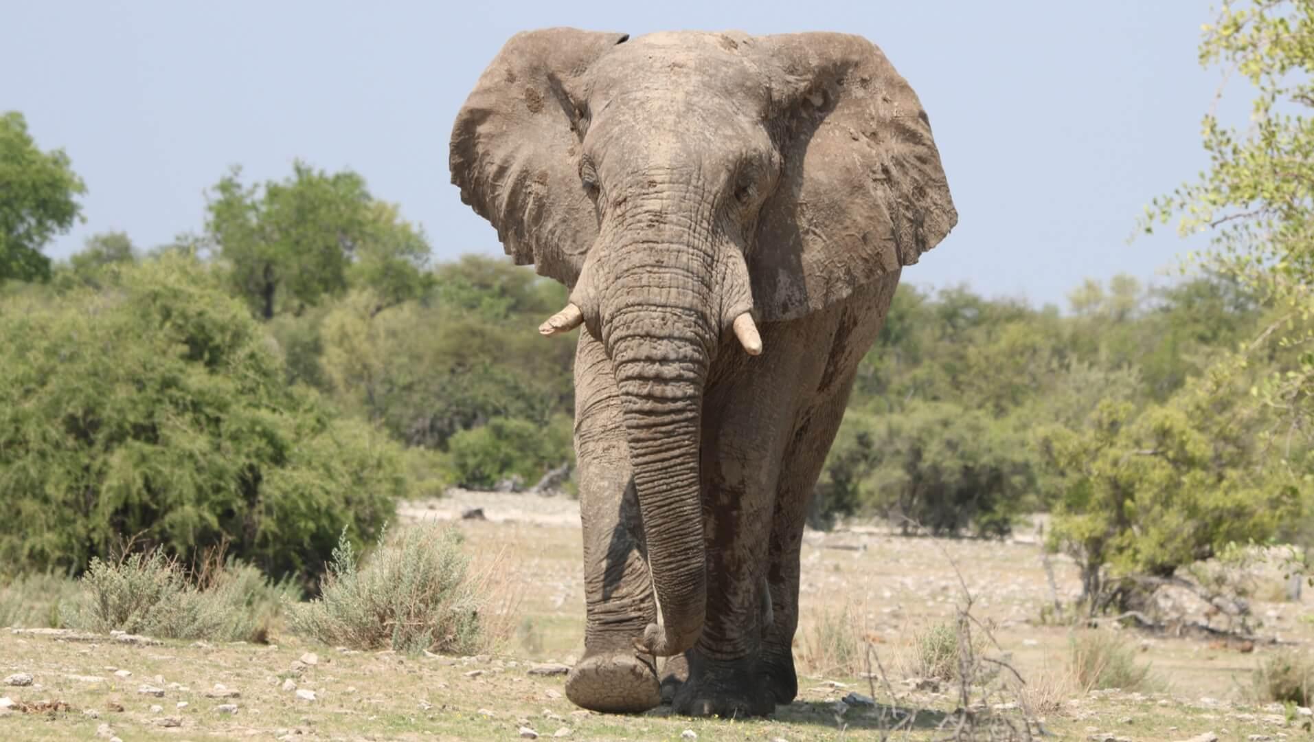 Kleingruppenreise Namibia | Neue außergewöhnliche Route