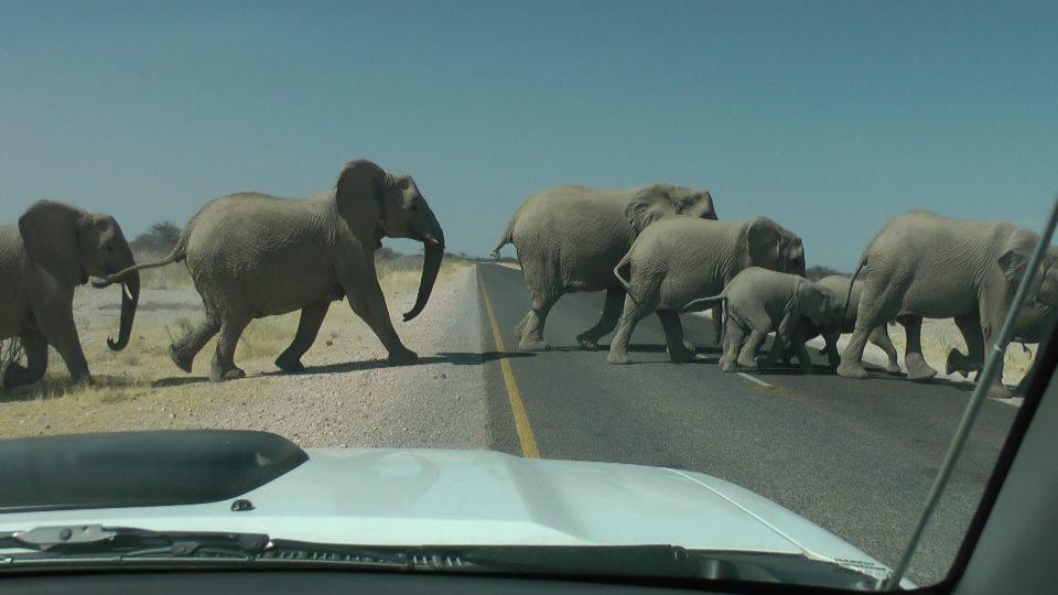 Elephant Parade, Etosha National Park, Namibia