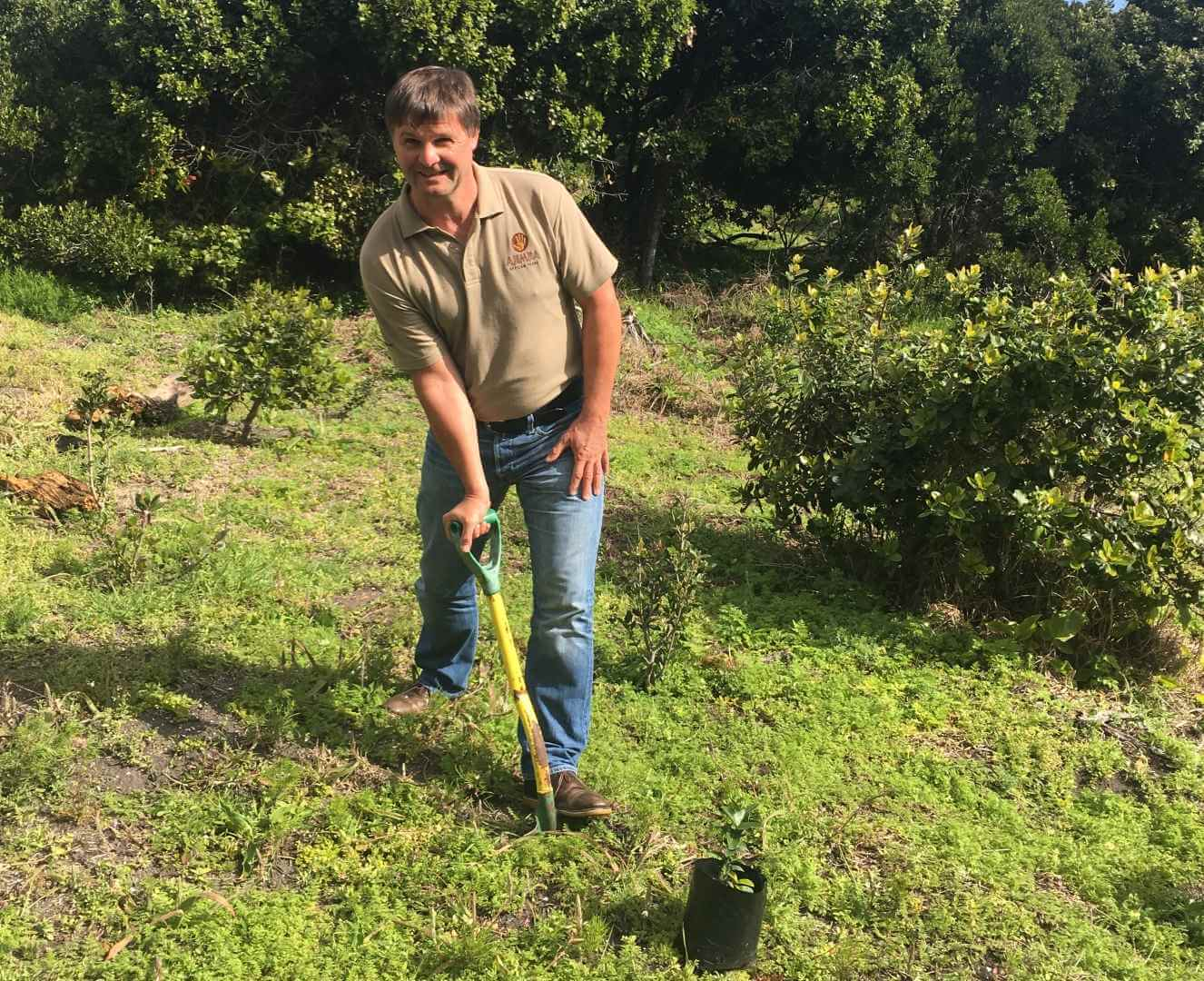 Ajimba plants tree at Grootbos