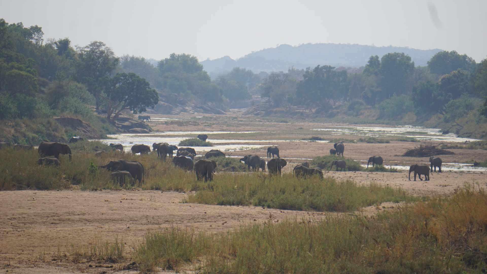 Elefanten im Limpopo - Botswana Tuli Block